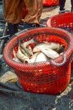 Łowi w czerwonym koszu w rybołówstwo kraju Tajlandia obraz royalty free
