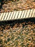 Łowi w sztucznym basenie na rybim gospodarstwie rolnym w Wietnam Rybołówstwo przemysł fotografia royalty free