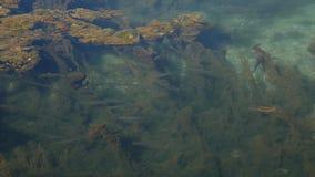 Łowi w wodnym widoku przez wody od above Przejrzysty wat zbiory