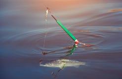 Łowi złapanego na haczyku w słodkowodnym stawie Zdjęcia Royalty Free