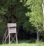 Łowiecka buda i rogacz w lesie obrazy royalty free
