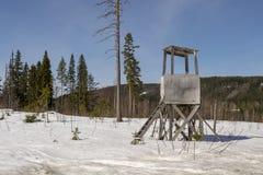 Łowiecki wierza używał pierwszego planu łosia amerykańskiego polowanie na zima dniu z śniegiem, Zdjęcie Stock