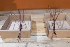 Łozinowi branchs dla koszy i łozinowe dekoracje dekoraci ac Zdjęcia Stock