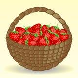 Łozinowy kosz pełno truskawki, łąkowe truskawki Soczyste jagody, zbiera Fotografia Royalty Free