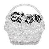 Łozinowy kosz peonia pełno kwitnie wektorową ilustrację royalty ilustracja