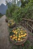 Łozinowy kosz wypełniał żniwo pomarańcze, Guangxi prowincja, southwes Fotografia Royalty Free