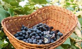 Łozinowy kosz z świeżo ukradzionymi czarnymi winogronami Fotografia Royalty Free