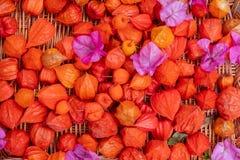 Łozinowy łozinowy kosz z świeżymi barwionymi czerwonymi pomarańcz menchii menchii kwiatami Bouganvillea i pęcherzyca w ogródzie n obraz stock