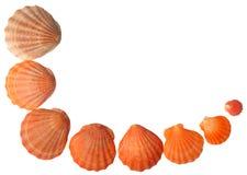 Łuk komponujący seashells obraz stock