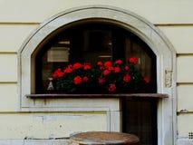 Łukowaty restauracyjny okno z zbutwiałym parapetem i czerwonymi bodziszkami zdjęcia stock