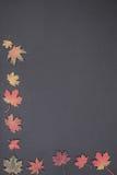 Łupkowa deska z liśćmi Zdjęcie Stock