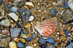 Łuska i kamienie w piasku na plaży fotografia stock