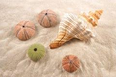 Łuska jako tło i Suszący Denni czesacy na piasku Fotografia Royalty Free