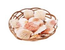 Łuska seashells Zdjęcie Royalty Free