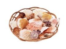 Łuska seashells Obraz Stock