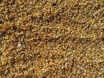 Łuska tło na plaży Zdjęcia Stock