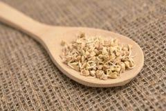 łyżka drewniana Gryk adra zdrowa żywność Neutralny tło Obrazy Stock