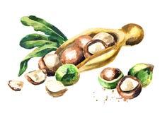 Łyżka z macadamia dokrętkami ilustracja wektor