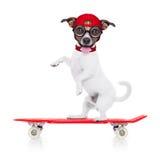 Łyżwiarki chłopiec pies Obraz Royalty Free