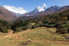 Łydka karmi paśniki w frontowym Ama Dablam halnym szczycie Nepal Obrazy Stock