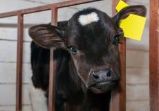 ?ydkowa dziewczyna w dispensary na gospodarstwie rolnym obraz royalty free