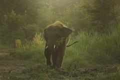 Łydkowy słoń zdjęcie stock