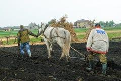 Łyknięcie konia pulles lemiesz przez pola Obraz Royalty Free