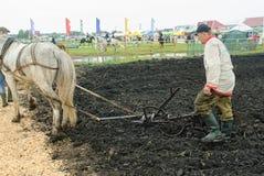 Łyknięcie konia pulles lemiesz przez pola Fotografia Stock