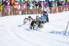 Łyknięcie psy w zimie Zdjęcia Stock