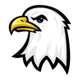 Łysego Eagle ptaka głowa Zdjęcia Royalty Free