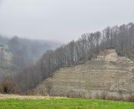 Łysi drzewa na skale Markotny krajobraz wczesna wiosna obrazy royalty free