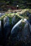 Łysy Eagle na skale Blisko Seward Alaska zdjęcie stock