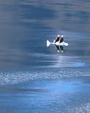 Łysy Eagles na lodu pławiku Obraz Royalty Free