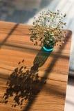 Łyszczec paniculata w błękitnej wazie Zdjęcia Stock