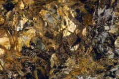 Łyszczyk w skale fotografia stock