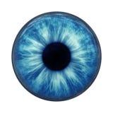 œil bleu illustration libre de droits