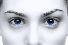 œil bleu femelles Image stock