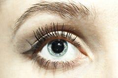 œil bleu femelles avec les pupilles dilatées étroitement image stock