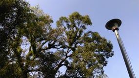 ŒTaiwan för Shigangï ¼ŒTaichungï ¼ träd och ljus arkivfoto