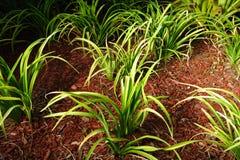 ściółkę roślin Obrazy Stock