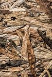 Ściśnięty sklejkowy materialny pionowo widok zdjęcie royalty free