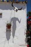 Ściana dekorował z byk czaszką i swój cieniem Zdjęcie Stock