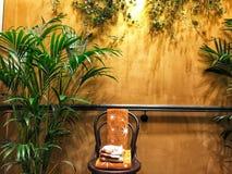 Ściana, domowy wystrój, żywy pokój, krzesło, rośliny domowe, nowożytny, obraz stock