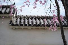 Ściana Himeji Grodowy i Czereśniowy okwitnięcie Zdjęcie Stock