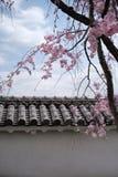 Ściana Himeji Grodowy i Czereśniowy okwitnięcie Obraz Royalty Free