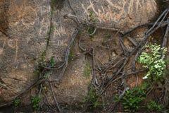 Ściana i gałąź zdjęcie stock