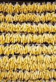 Ściana kukurudza Obrazy Stock