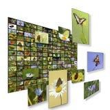 Ściana motyli obrazki zdjęcia stock