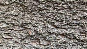 Ściana ostrzy kamienie zbiory wideo