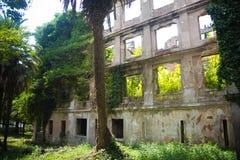 Ściana rujnujący budynek przerastający bluszczem fotografia stock